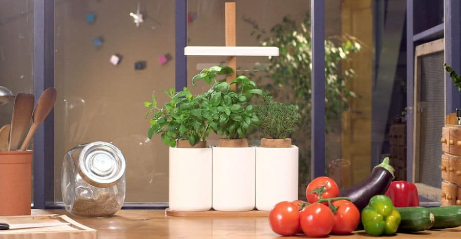 faire pousser légumes appartement