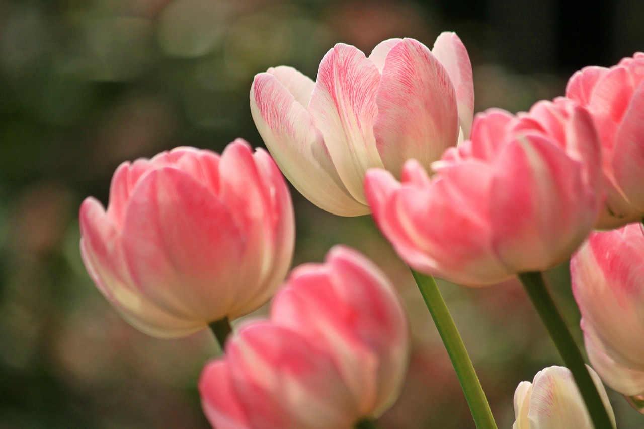 astuce pour conserver des fleurs coupées