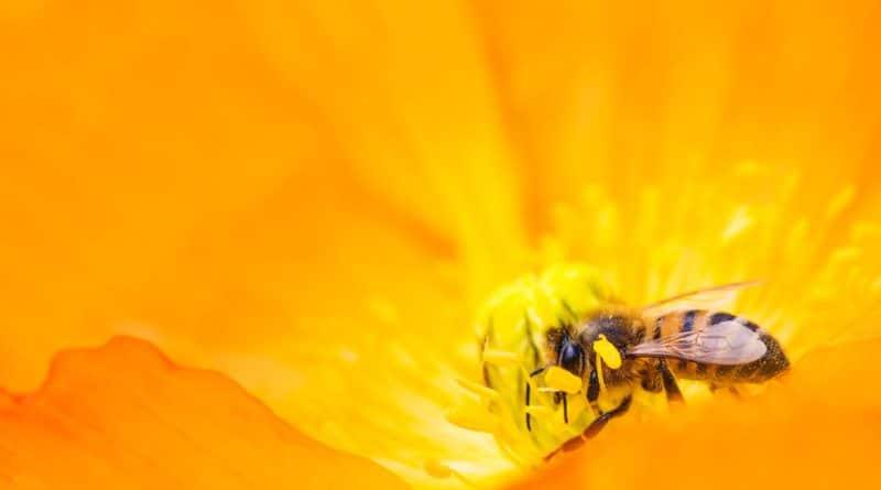 pollen-gelee-royale