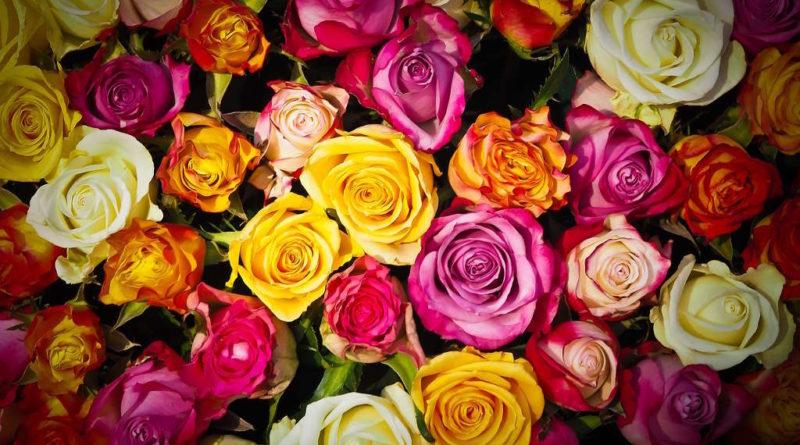 faire une rose éternelle