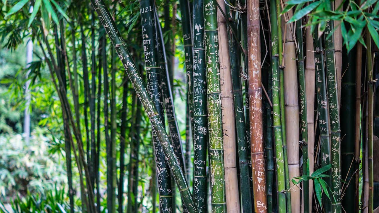 lutter contre les bambous