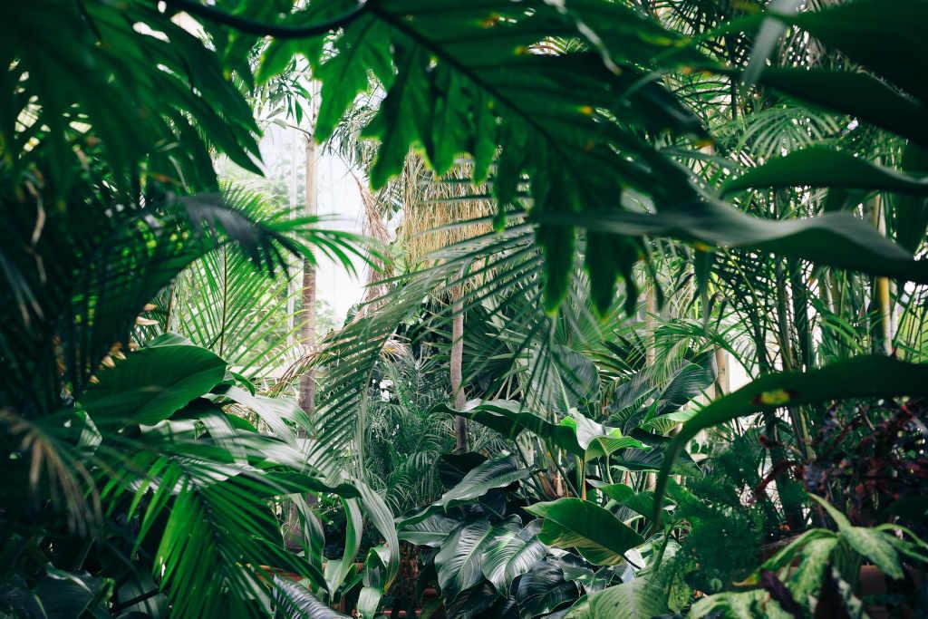 biodiversité végétale