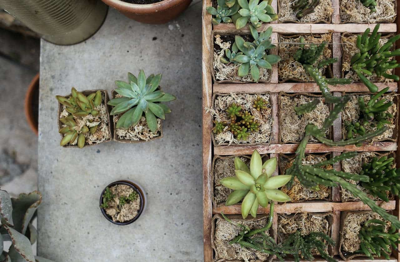 Entretien des plantes succulentes