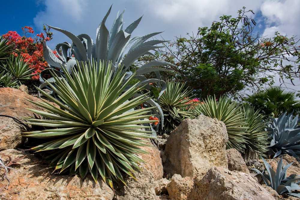 creer jardin sans arrosage