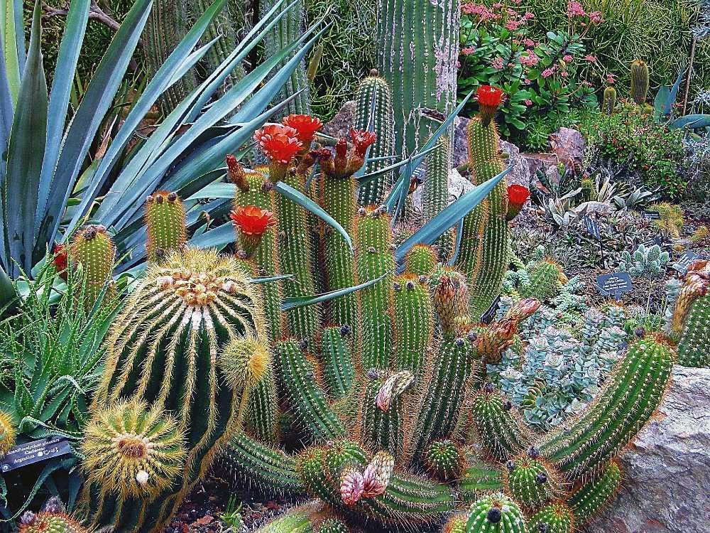 plantes sans arrosage
