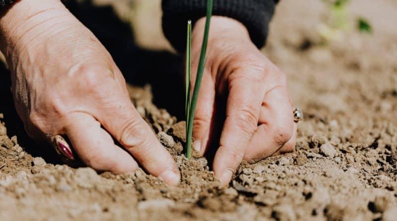 desinfecter terre jardin